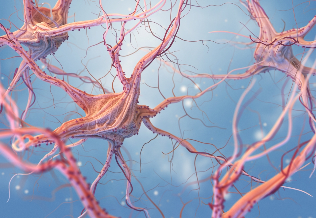 Image depicting nerve cells involved in referred pains like sciatic pain, headaches and migraines.